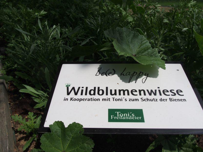 Toni's Wildblumenwiese im Rogner Bad Blumau