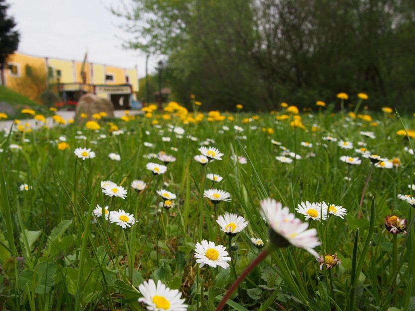 Gänseblümchen © Rogner Bad Blumau