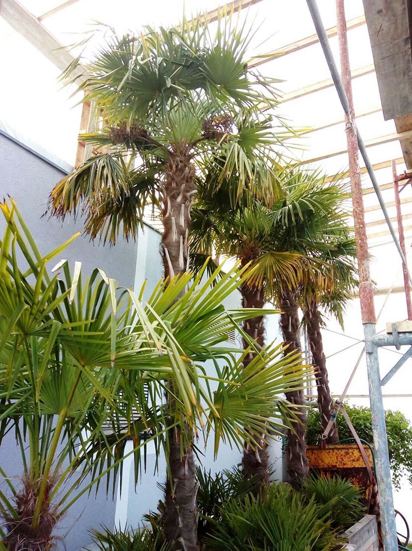 Palmen © Rogner Bad Blumau
