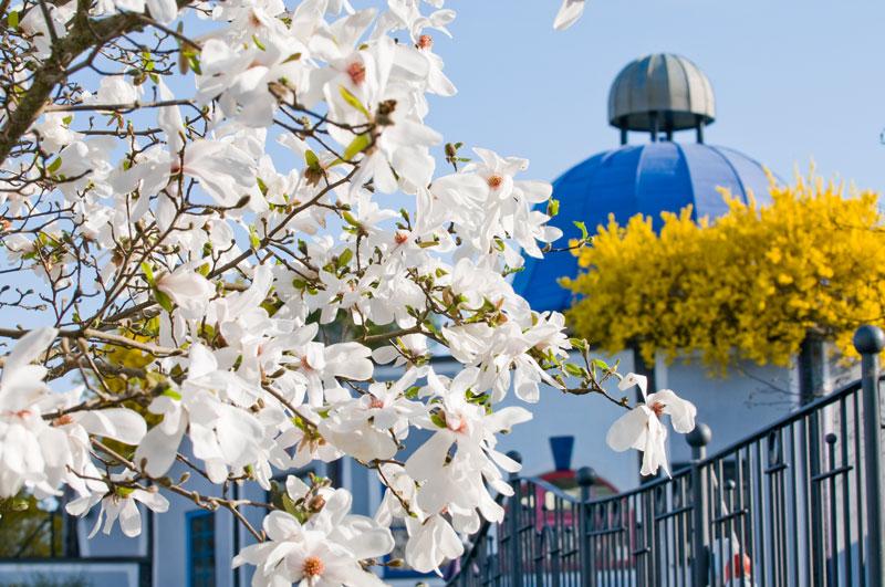 Frühling Rogner Bad Blumau